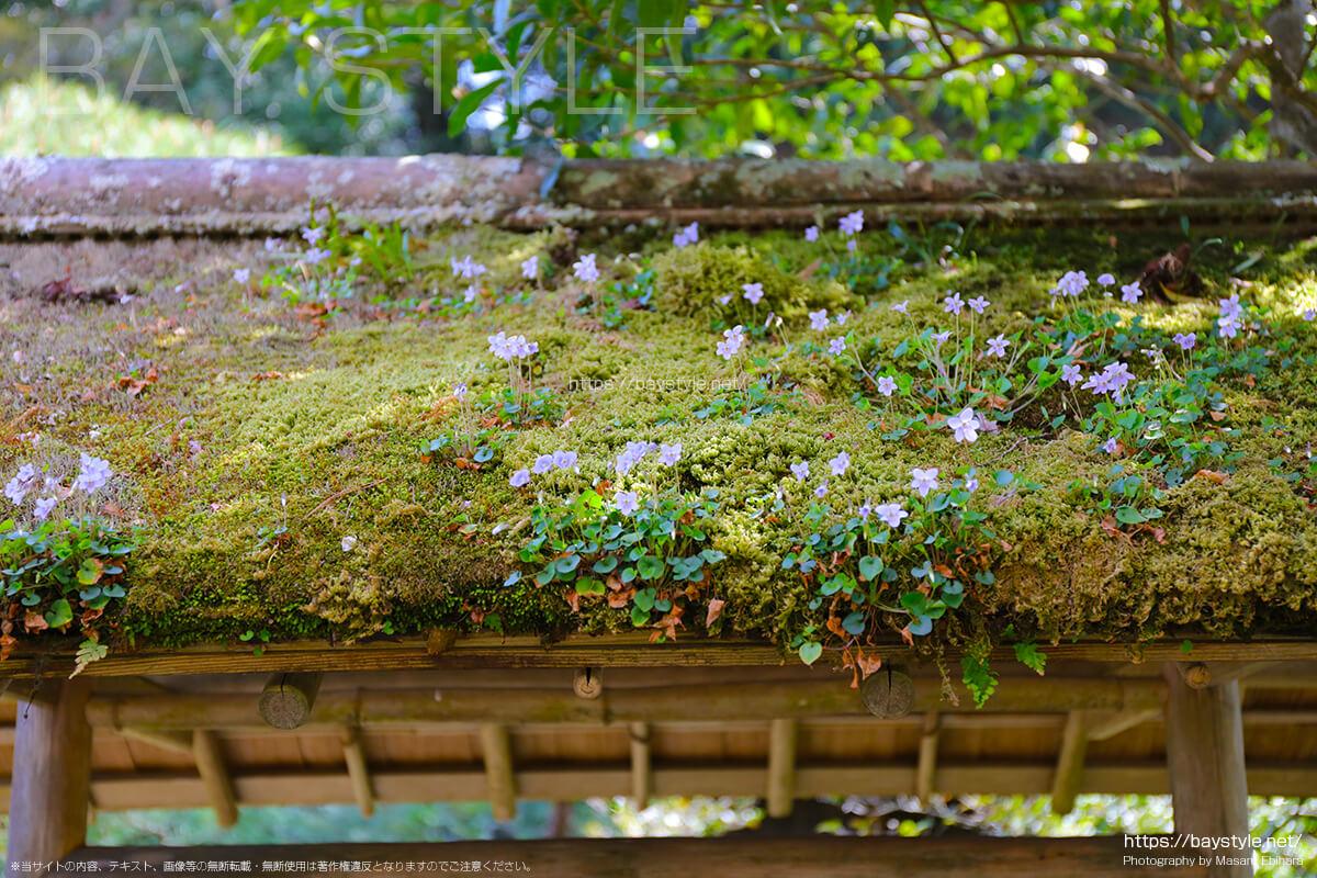 苔生す屋根