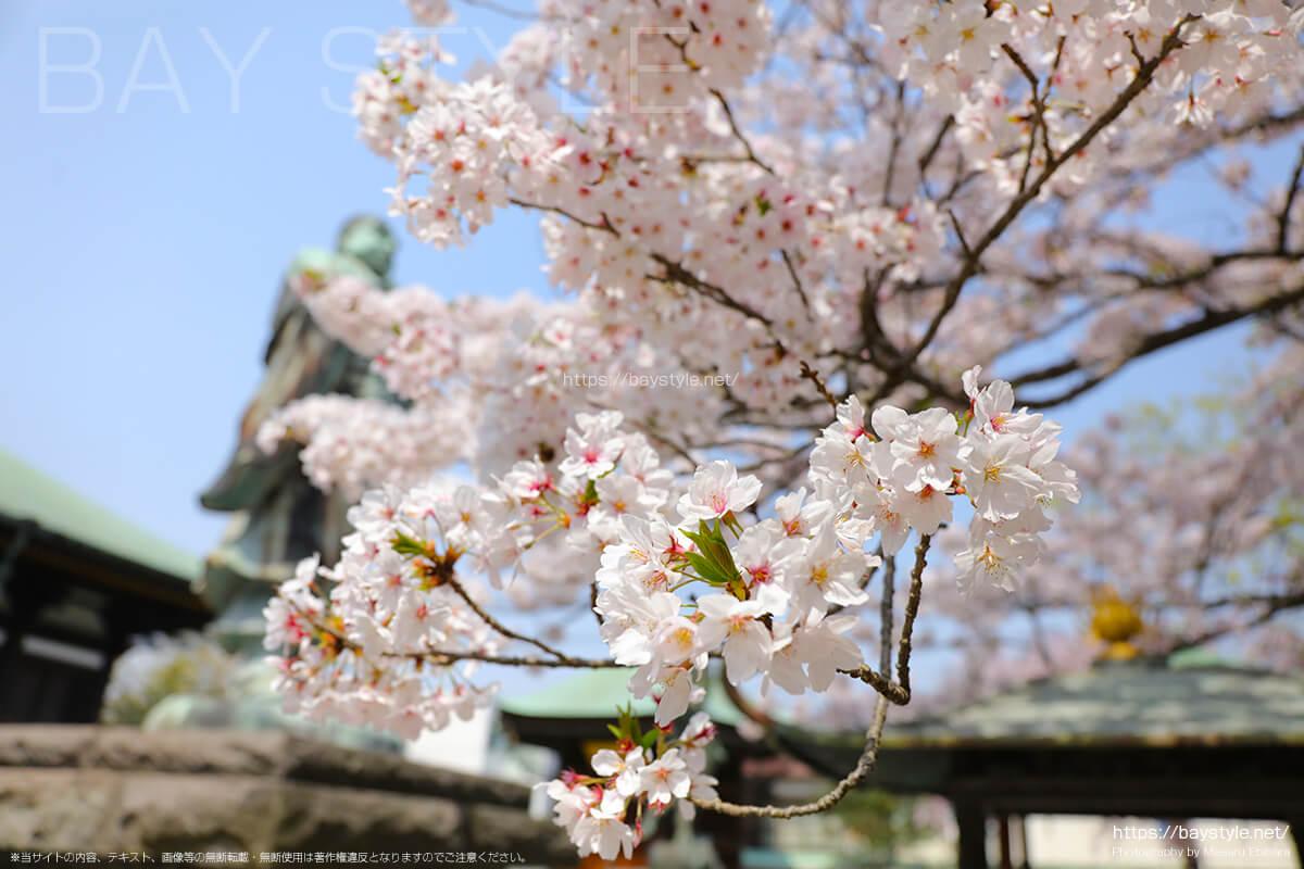 日蓮聖人と四天王像の像がいる本堂前は桜が満開