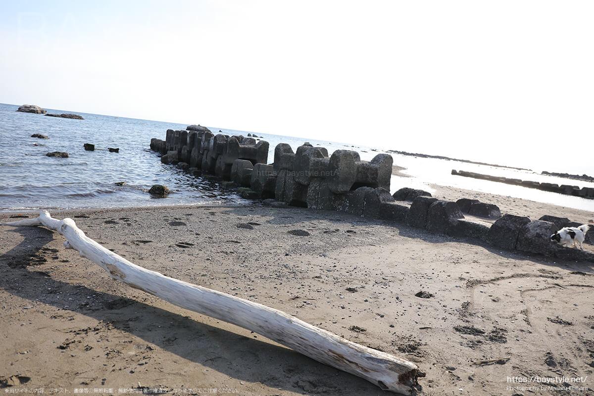 大浜海岸の流木