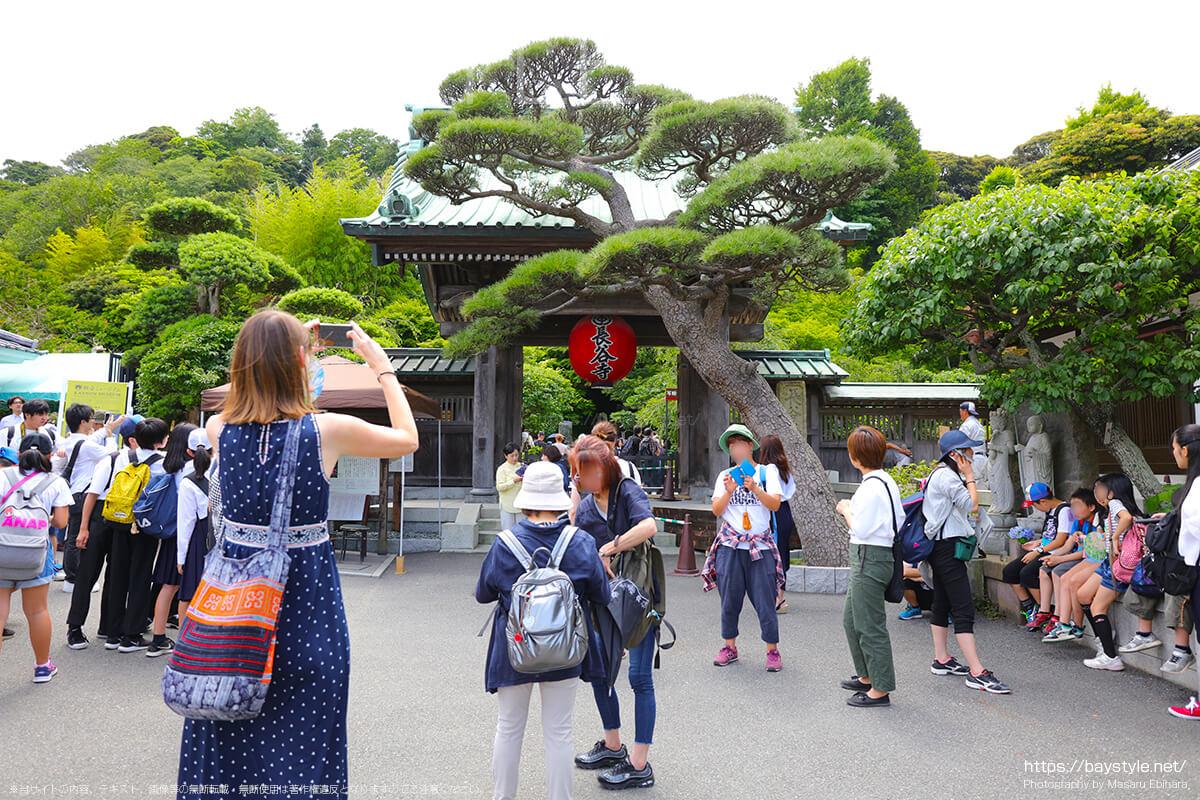 あじさいシーズンに突入した長谷寺の入口