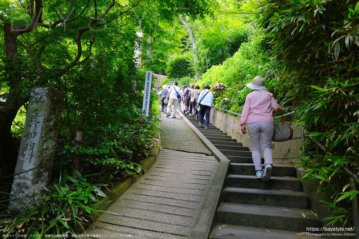 あじさい路の階段
