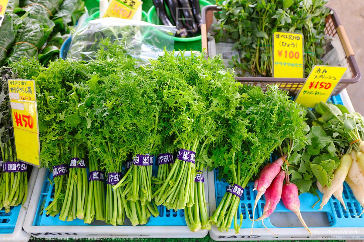 グリーンフリル(からし菜)