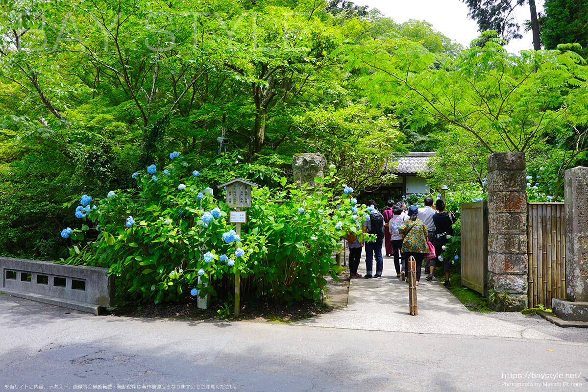 6月1日に訪れた際の明月院の入口