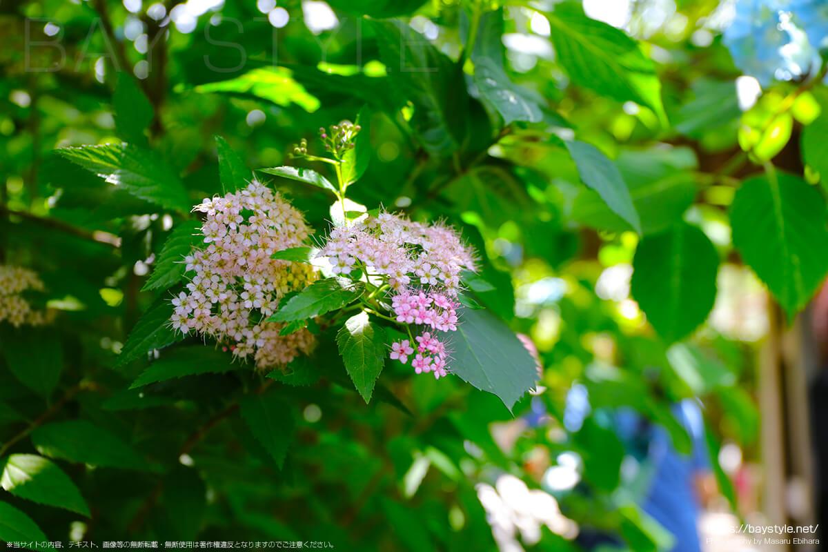 中門前に咲く下野の花