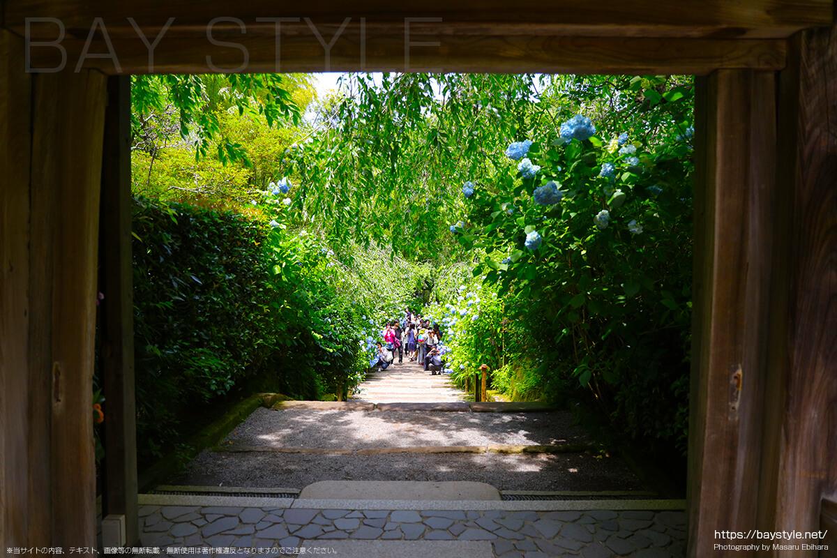 中門手前から竹林側に進む通路