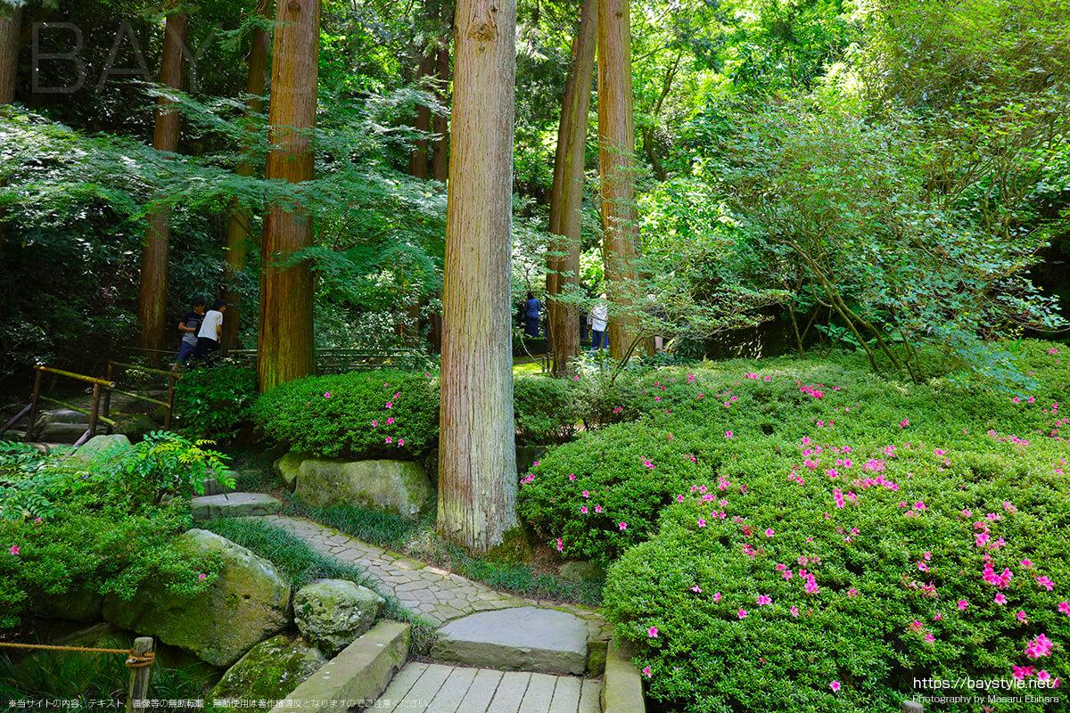 後庭園にある山道