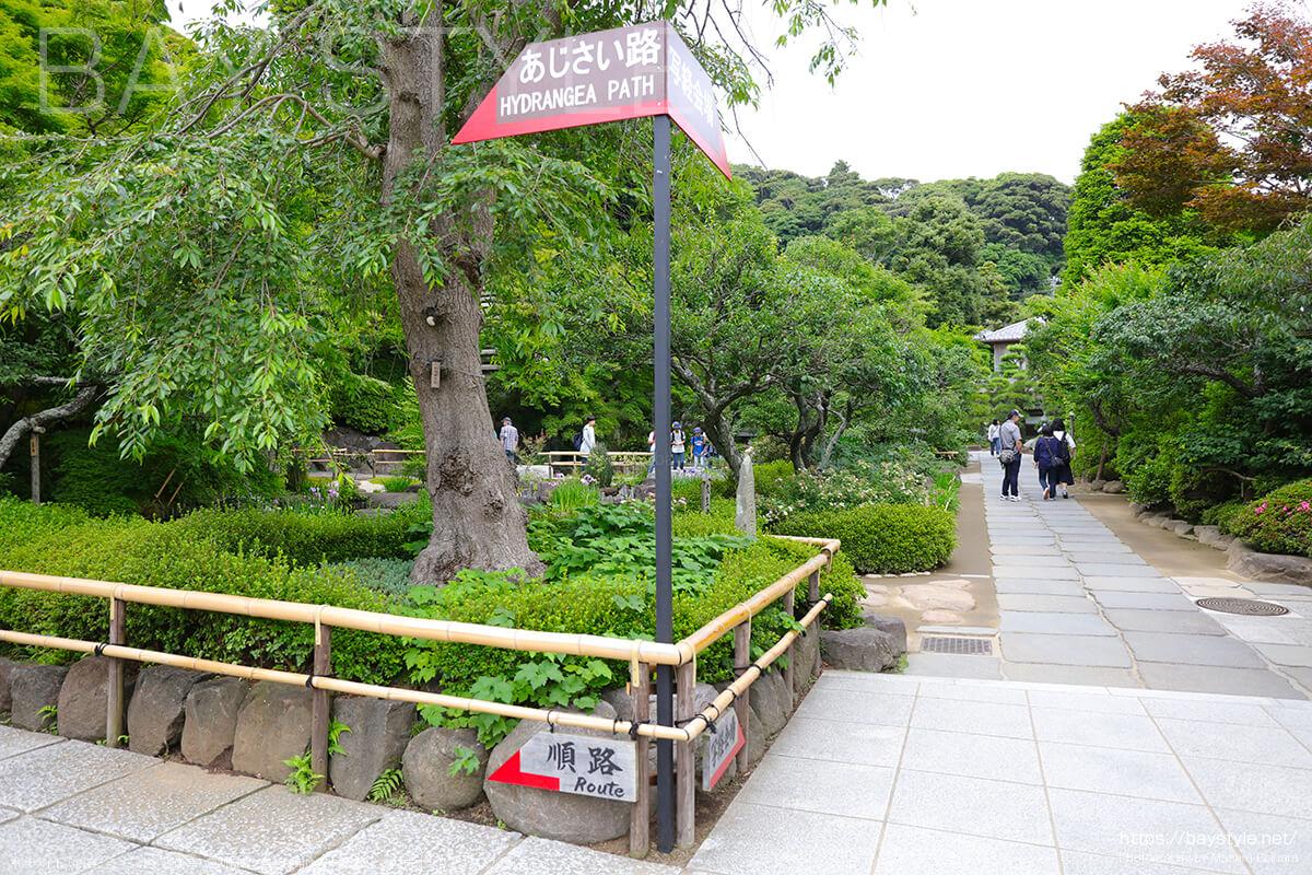 6月15日、平日朝8時台前半の長谷寺