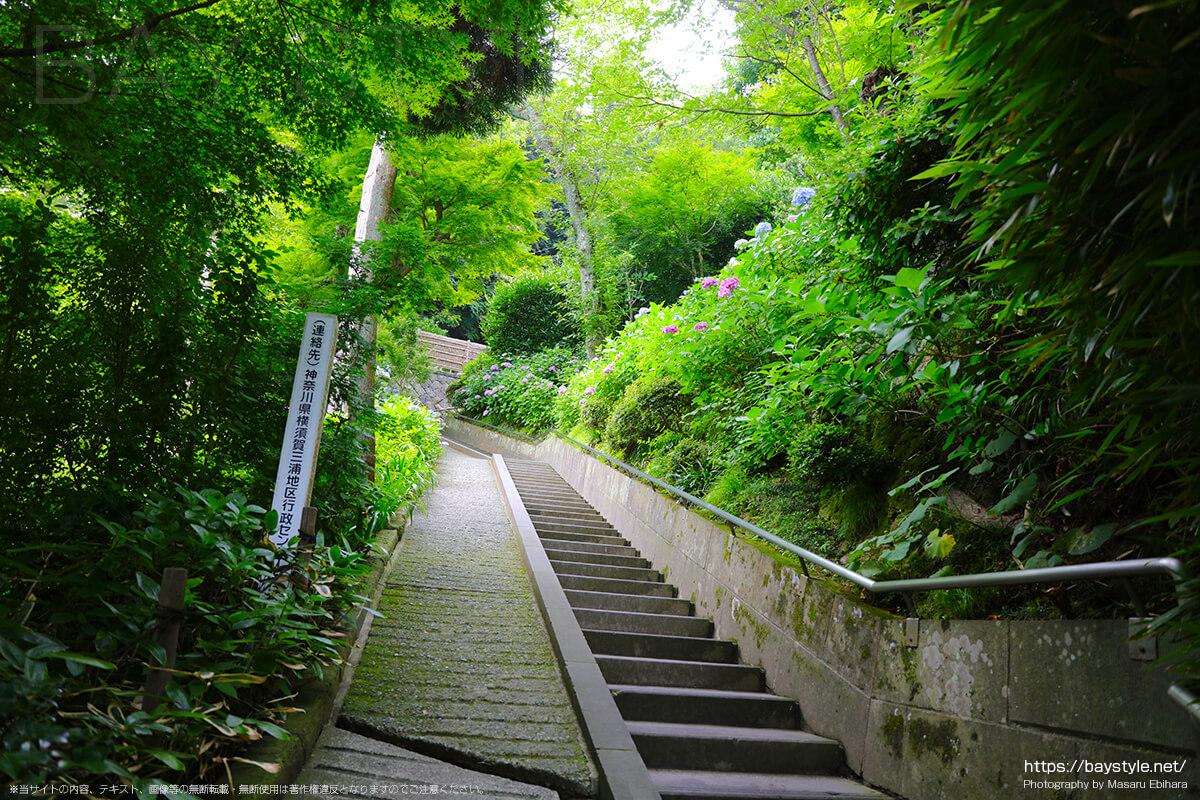 6月15日、平日朝8時台前半のあじさい路へ向う階段