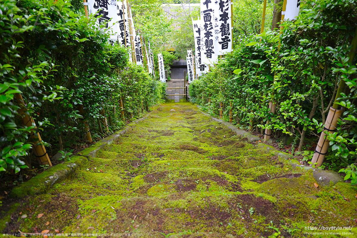 杉本寺の苔階段