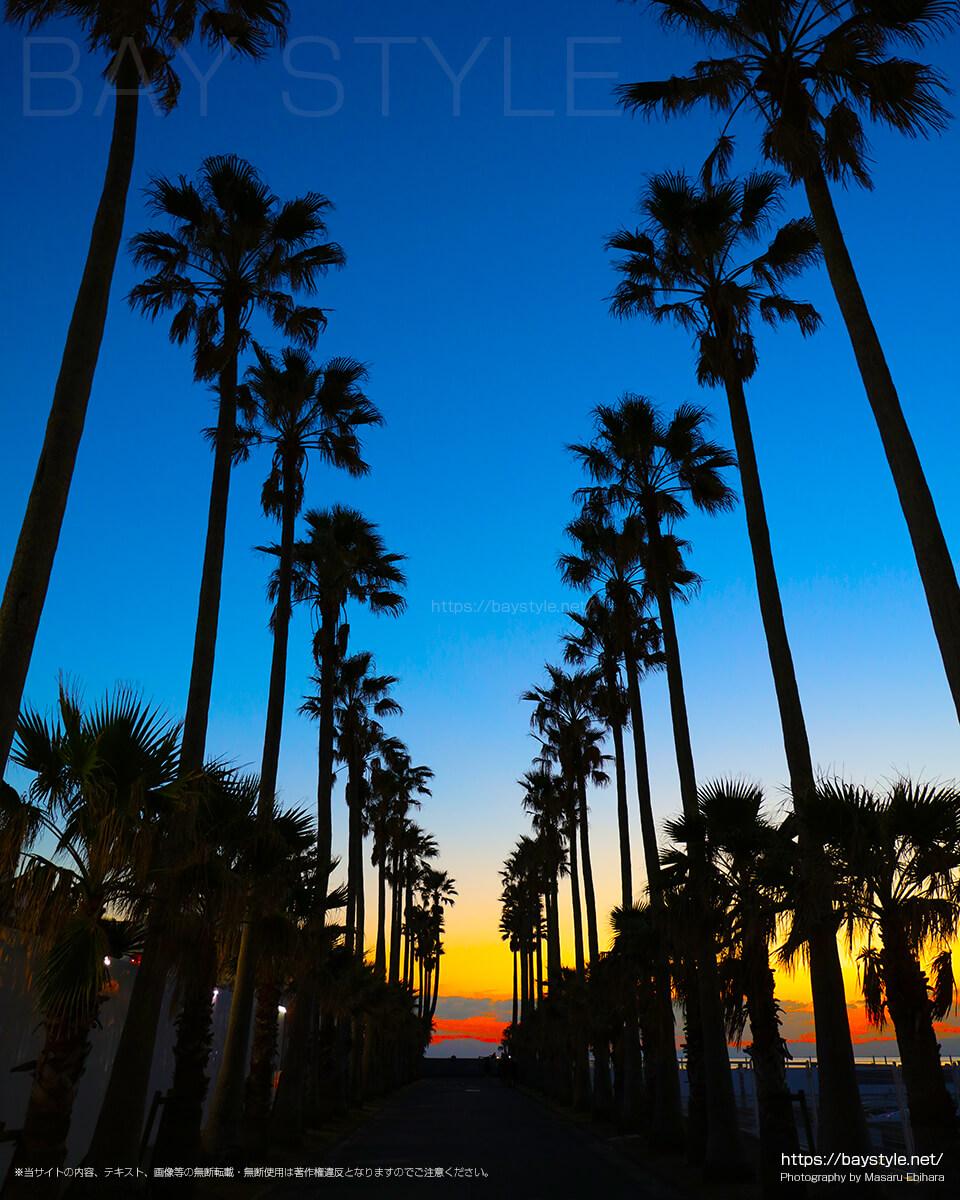 椰子の木の並木道の夕暮れ